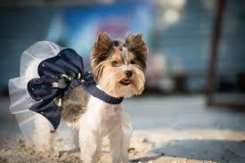 The 25 Best Small <b>Dog Dresses</b> of 2019 - <b>Pet</b> Life Today