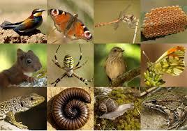 Resultat d'imatges de ETIQUETA ELS ANIMALS XTEC