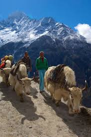 best images about mount everest tibet trekking traffic jam on mount everest base camp