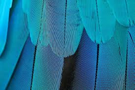 Everything You Need To Know About <b>Feathers</b> | Bird Academy • The ...