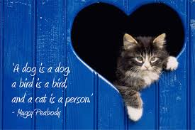 Cat Quotes/Sayings