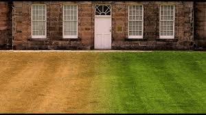 backdrops green grass lawn