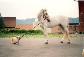 Πως βοηθούν  τα ζώα στην ανάρρωση..