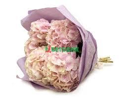 Купить <b>Букет</b> из <b>5 розовых гортензий</b> в жатой бумаге в городе ...