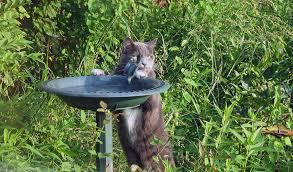 Питьевой фонтанчик для кошек: выбор, сравнение, рекомендации