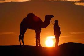 صور ولاية الوادي images?q=tbn:ANd9GcS