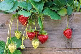 Cách trị nám hiệu quả với các loại trái cây tươi-4