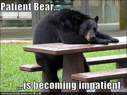 Patient Bear is losing patience with your shenanigans | Patient ... via Relatably.com