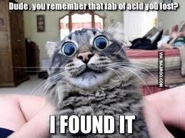 20 LOL Cats with bigger eyes | Bajiroo.com via Relatably.com