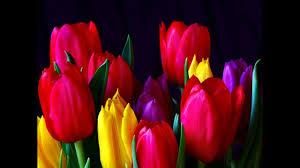 <b>Тюльпаны</b> нежные <b>весенние цветы</b> - YouTube