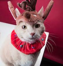 Image result for cats in santa costumes