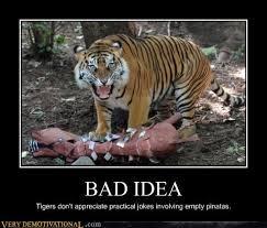 Tiger pinata meme humor | Funny stuff | Pinterest | Memes Humor ... via Relatably.com