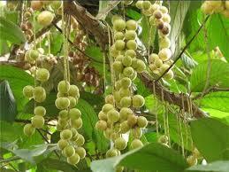 buah rambai