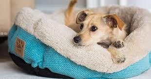 19 Best <b>Dog Beds</b> 2021 | The Strategist | New York Magazine
