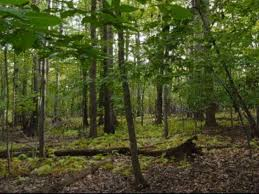 essay on conservation of forest   best custom written essays from    essay on conservation of forest   best custom written essays from    per page