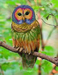 Image result for image of owl