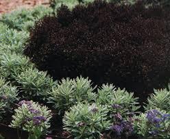 Small Picture 149 best Jardinnaire Noir images on Pinterest Black flowers