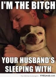Funny Dog Memes Images Photos - FynnEXP via Relatably.com