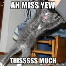 Animals on Pinterest | Australian Shepherd, Puppy Meme and Aussies via Relatably.com