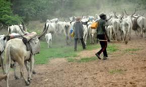 Image result for photo of herdsmen
