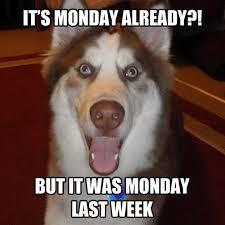 11 Marvelous Meme Monday Dog Memes - Petcentric by Purina via Relatably.com