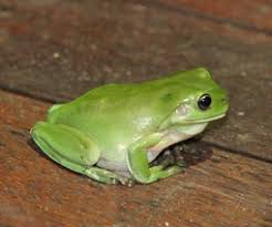 <b>Frog</b> ponds | Environment | Department of Environment and Science
