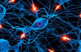 https://luisamariaarias.wordpress.com/cono/tema-1-a-relacion-no-ser-humano/pregunta-3-a-relacion-o-sistema-nervioso/