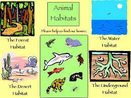 Resultado de imagen de Habitats