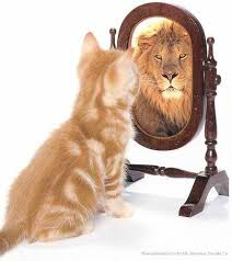 Image result for picture of a cat looking in a mirror and seeing a lion
