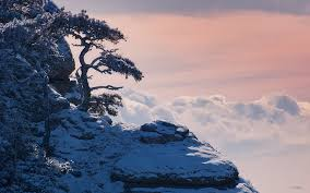 Image result for 黄山 松柏