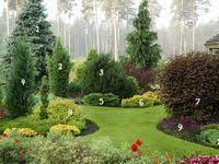 Надо попробовать: лучшие изображения (67) | Садовые идеи ...