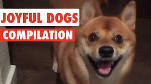 <b>Joyful Dogs</b> Video Compilation 2016 - YouTube