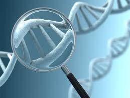Resultado de imagem para dna embrioes