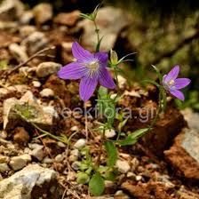 greek flora