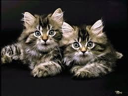 """Résultat de recherche d'images pour """"gifs de chats"""""""