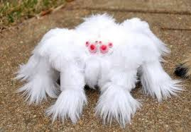 Image result for tarantula