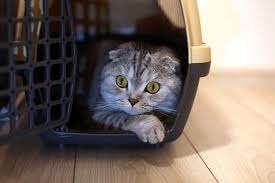 The 50 Best Cat Carriers & <b>Travel</b> Crates of 2020 - Pet Life Today