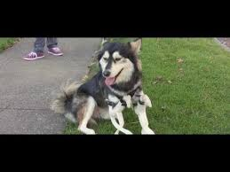 Taking Derby the <b>Dog</b> to New Heights with 3D <b>Printing</b> - YouTube