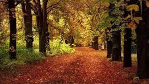 Resultado de imagen de Valle del Ambroz en otoño