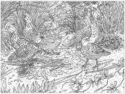 <b>Animals</b> - <b>Coloring</b> Pages for Adults