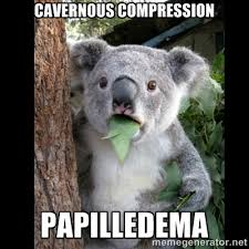 Cavernous compression Papilledema - Koala can't believe it | Meme ... via Relatably.com