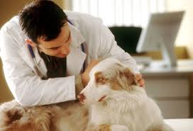 Δωρεάν στειρώσεις και εμβολιασμοί αδέσποτων στην Σίφνο...