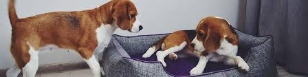 <b>Лежанки</b> для <b>собак</b> и кошек DENDOG (PetsBedzzz) | ВКонтакте