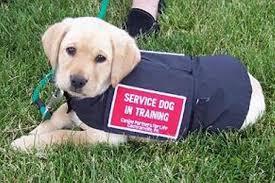 Service Puppy
