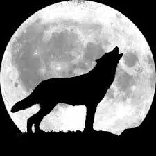 Why do <b>wolves howl</b> at the <b>moon</b> according to legends? - Quora
