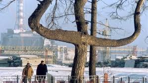Картинки по запросу чернобыльская сосна