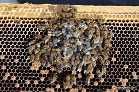 Αποτέλεσμα εικόνας για ded beehive
