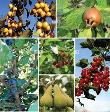 divers fruits