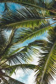 <b>Tropical</b> Wallpapers: Free HD Download [500+ HQ]   Unsplash