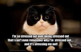 Stressed Out Meme | im-so-stressed-out-over-being-stressed-out-cat ... via Relatably.com
